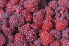 Fresh ripe raspberry background closeup Stock Images
