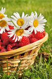 Fresh ripe raspberry and flowers Stock Photo