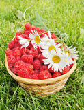 Fresh ripe raspberry and flowers Royalty Free Stock Photo