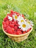 Fresh ripe raspberry and flowers Royalty Free Stock Photo