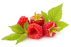 Fresh ripe raspberry with leaf isolated on the white background. Ripe raspberry with leaf isolated on the white background Stock Photo