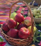 Fresh ripe red apples in a basket. Some ripe red apples in a basket stock photo