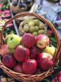 Fresh ripe red apples in a basket. Some Fresh ripe red apples in a basket royalty free stock photos