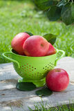 Fresh ripe red apples Royalty Free Stock Photo