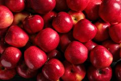 Fresh ripe red apples. As background royalty free stock photo