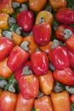 Fresh Ripe Red Brazilian Caju Cashew Fruit. Brazilian caju cashew fruit harvest colorful red display on green leaves stock photos
