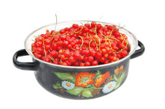 Fresh ripe red currant Royalty Free Stock Photos