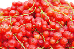 Fresh ripe red currant Royalty Free Stock Photography