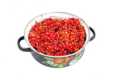Fresh ripe red currant Stock Images