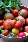 Fresh Ripe Red and Green Tomatoes in Big Bowl. Harvest of freshly gathered ripe red, green and yellow tomatoes in a big bowl Stock Photos