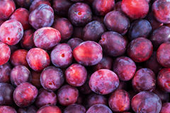 Fresh ripe red plums stock photos
