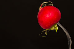 Fresh radish. Fresh ripe red radish on black background Royalty Free Stock Photos