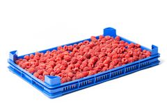Raspberries in a Crate on White. Fresh ripe red raspberries in a plastic crate on a wholesale market isolated on white Royalty Free Stock Photo