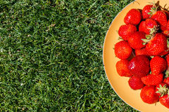 Fresh ripe red strawberries on plate on green grass. Top view of fresh ripe red strawberries on plate on green grass Royalty Free Stock Image