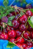Fresh ripe red sweet cherries and clover on a blue napkin. Cherry fruits in a garden in summertime. Shallow depth of field. stock photo