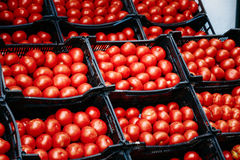 Fresh ripe red tomatoes are in the boxes on Stock Images
