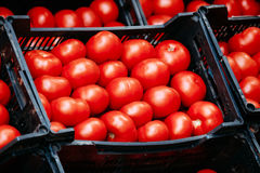 Fresh ripe red tomatoes are in the boxes on Royalty Free Stock Photography