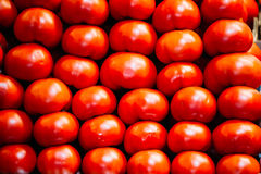 Fresh ripe red  tomatoes forming background Royalty Free Stock Image