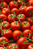 Fresh ripe red tomatoes in the market Stock Photography