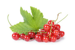 Fresh ripe redcurrant with leaf Royalty Free Stock Photos