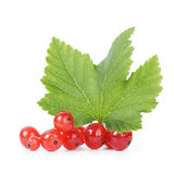 Fresh ripe redcurrant with leaf Stock Photography