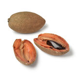 Fresh ripe sapodilla cut in two parts Royalty Free Stock Images