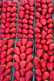 Fresh ripe Strawberries. Fresh red ripe strawberries in vertical rows Royalty Free Stock Photography
