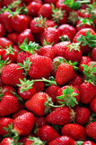 Fresh ripe strawberries Stock Images
