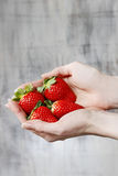 Fresh ripe strawberries in beautiful hands Stock Photos