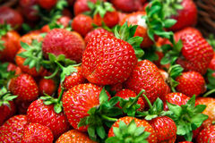 Fresh ripe strawberries. Fresh, ripe strawberries. The strawberries are a bright red color with green stems and leaves stock photo