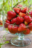 Fresh ripe strawberries in glass bowl Stock Photography