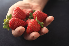 Fresh, ripe strawberries held by man Royalty Free Stock Photography