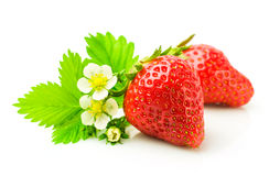 Fresh ripe strawberries with leaf and flowers Stock Image