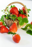 Fresh ripe strawberries with leaves and blossom Royalty Free Stock Photography