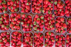 Fresh ripe strawberries in plastic boxes on market stall in Kisač, Serbia. Strawberries displayed in plastic boxes flat lay view royalty free stock images