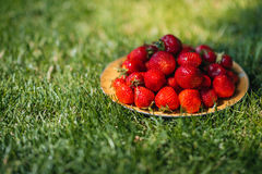 Fresh ripe strawberries on plate on green grass Royalty Free Stock Image