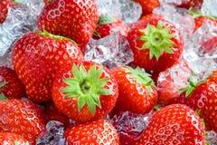 Fresh ripe strawberry with ice. Fruit Background Stock Images