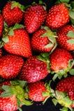 Fresh Ripe Strawberry Stock Images