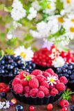 Fresh ripe summer raspberries and other berries. Fresh ripe summer berries - raspberry in the foreground, black and red currant, blueberry on background royalty free stock photography
