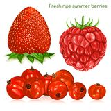 Fresh ripe summer berries. Royalty Free Stock Photography