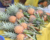 Fresh Ripe Sweet Pineapple Royalty Free Stock Images