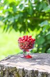 Fresh ripe sweet summer berries. Red wet cherries in a transparent vase on tree stump outdoors. Cherry fruits in summer park royalty free stock photos