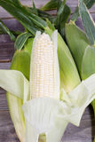Fresh Ripe Sweet White Corn Stock Image