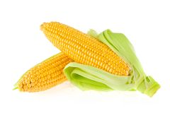 Fresh ripe sweetcorn with green leaves. Stock Image