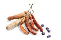 Fresh ripe tamarinds on white background Stock Photography
