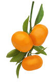 Fresh ripe tangerines with green leaves isolated on white Royalty Free Stock Photos
