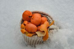 Fresh ripe tangerines in a large mug wrapped in woolen mating in the snow. Mandarins in the snow. royalty free stock photo