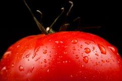 Fresh ripe tomato on black Royalty Free Stock Photos