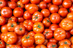 Fresh and ripe tomatoes Royalty Free Stock Image