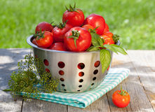 Fresh ripe tomatoes in colander Stock Images